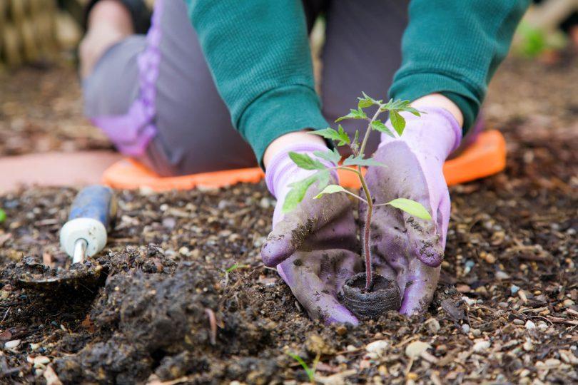 jardinagem-corporativa-5-cuidados-que-sua-empresa-deve-tomar.jpeg